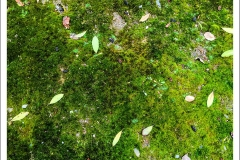Moss-Leaves-IMG_5512-web