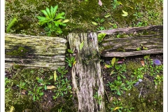 Moss-RR-Ties-IMG_5524-web