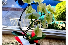 Orchid-window-IMG_5325-web