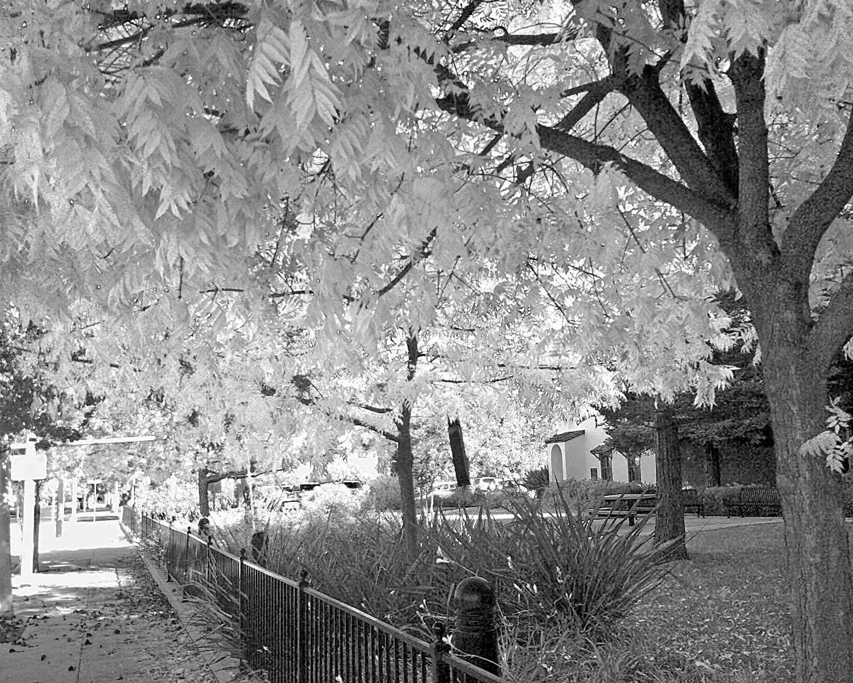 Fall-Trees-B&W-IMG_20111122_103025-copy