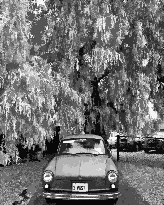 VW-under-Pepper-Tree-B&W-IMG_20111010_122929-copy