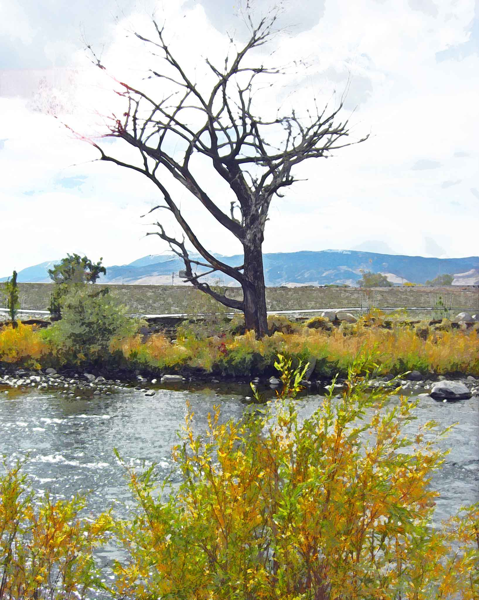 Water-Color-Tree-Truckee-River-Mod-10-18-09-CIMG0496