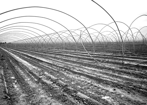 Greenhouse-Bones-B&W-N5200857-web-small