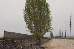 Fence-Tree-N5200864-web-small