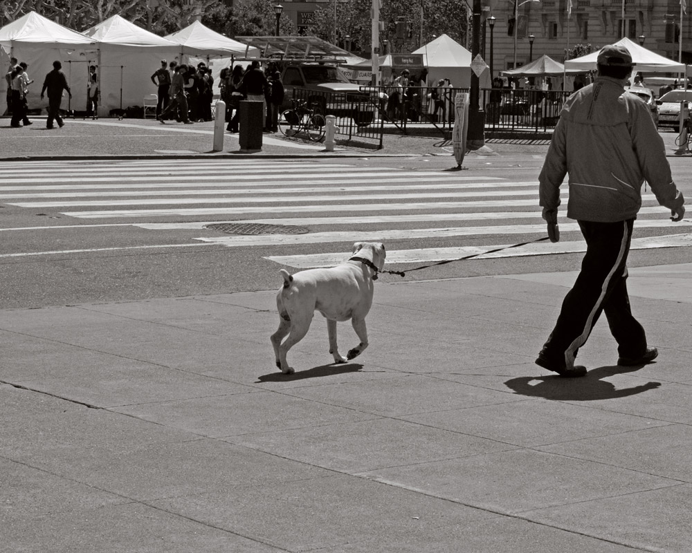 _4200616-Dog-Walk_B&W-web