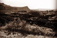 Olde-Desert-IMG_2174-web