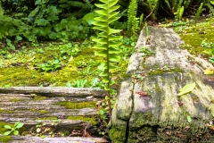 Fern-RR-Ties-IMG_5545-web