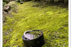 Lawn-light-moss-IMG_5598-web