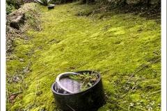 Lawn-light-moss-IMG_5598-web