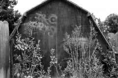 Red-Shed-wide-B&W-N5200852-web-small