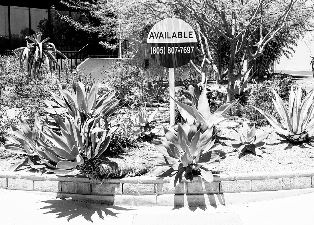 Available-garden-BW-N6301177-web