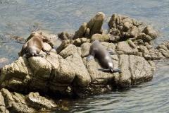 Seals_9052922