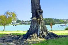 Tree-Lake-mod