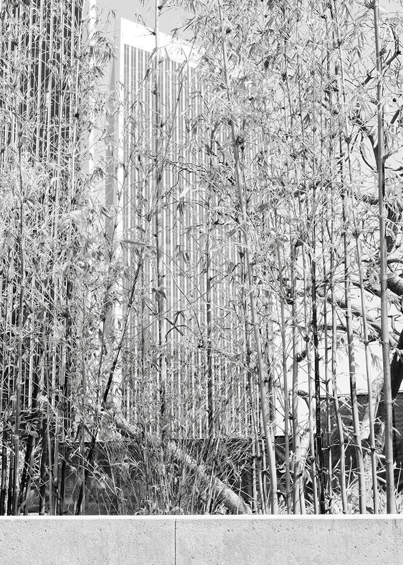 PW1-Bamboo-BW-L1050839-web